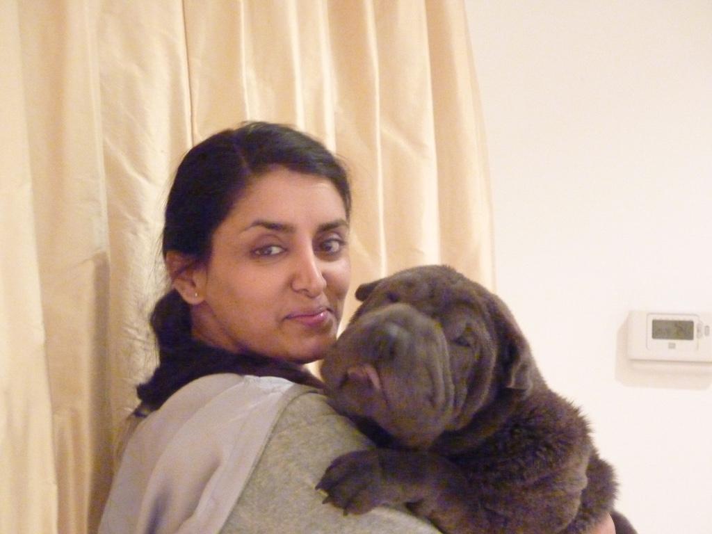 Shar-Pei Aneeta Prem dog Deeva
